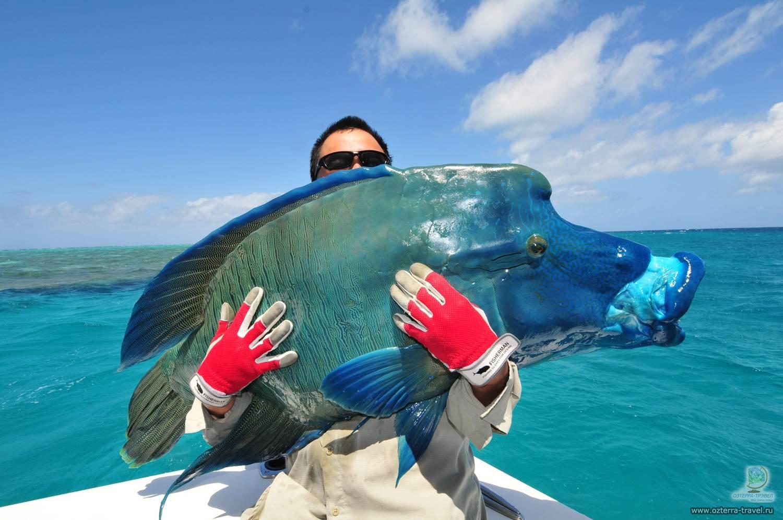 Морская рыбалка на Мальдивах