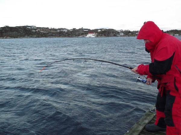 Самые популярные рыболовные базы для трофейной рыбалки в Норвегии